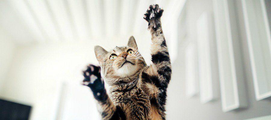 фотографы котика