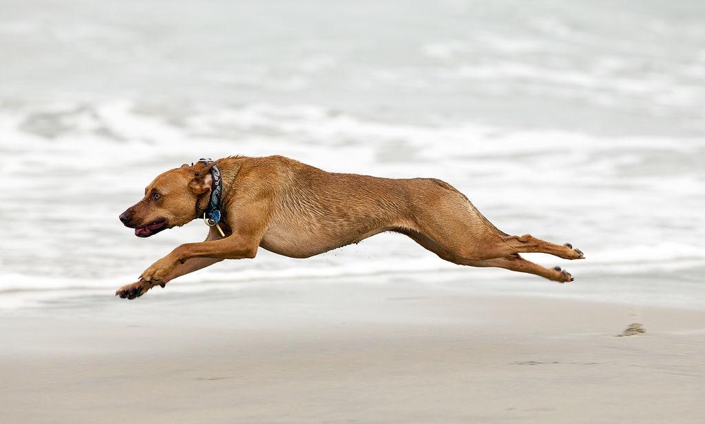 этому картинки бегущей собаки с боку офіційній групі