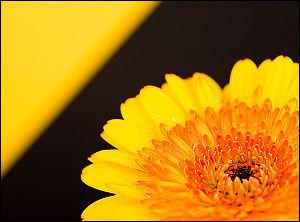Основные способы увеличить резкость фотографий [урок, фотошоп, photoshop, увеличение резкости, резкость]